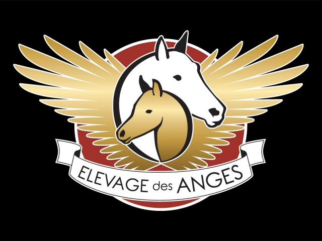 Elevage des Anges : Photo